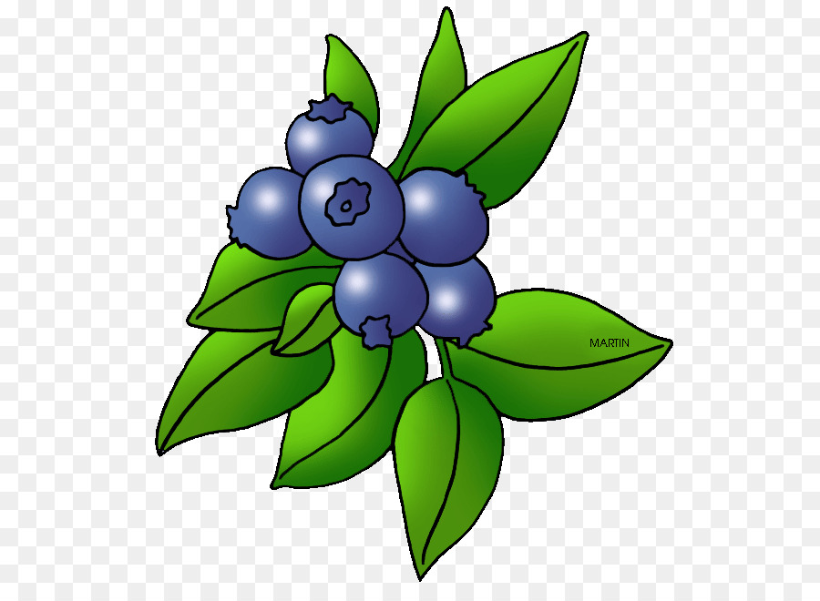 Blackberry fruit clip art. Blueberry clipart blueberry plant