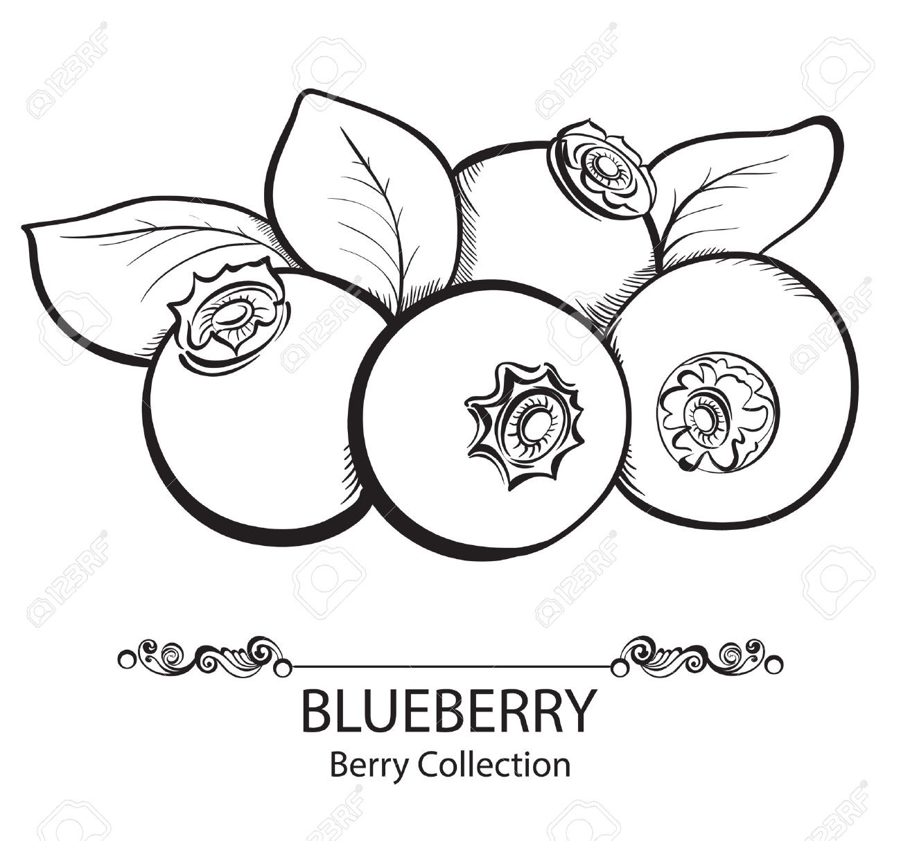Station . Blueberry clipart black and white