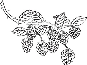Berry clipart black and white.  collection of high