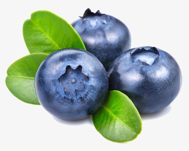 Blueberries clipart blue food. Blueberry fruit png transparent