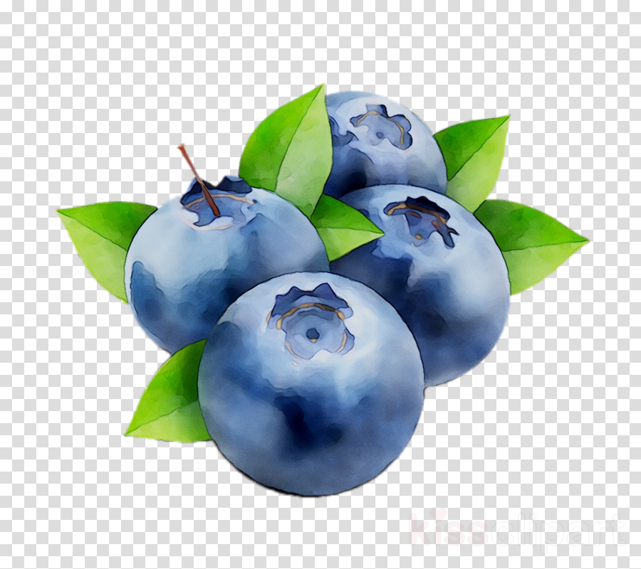 Blueberry clipart blueberry plant. Fruit tree transparent
