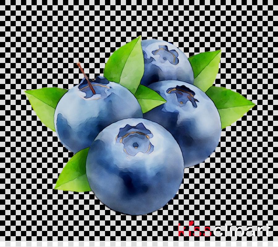 Fruit tree blueberry plant. Blueberries clipart clip art