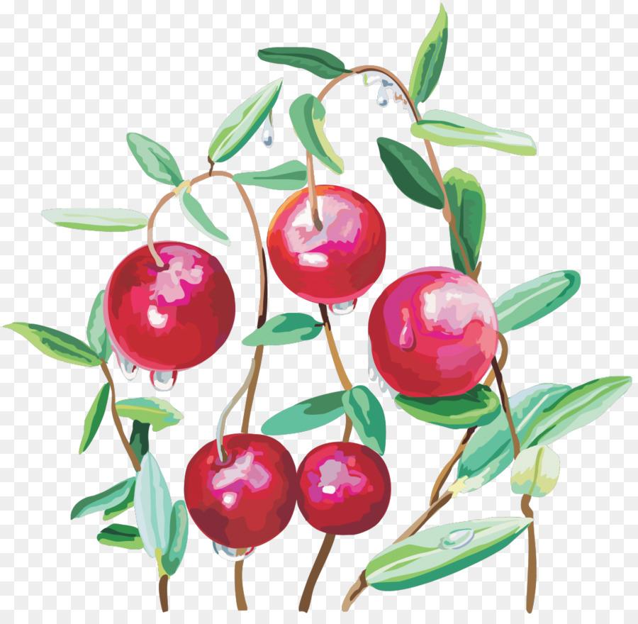 Cherry clipart cranberry, Cherry cranberry Transparent