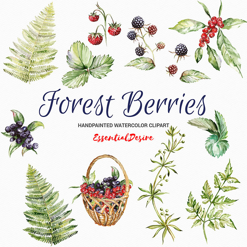 Watercolor basket diy this. Berries clipart forest berry