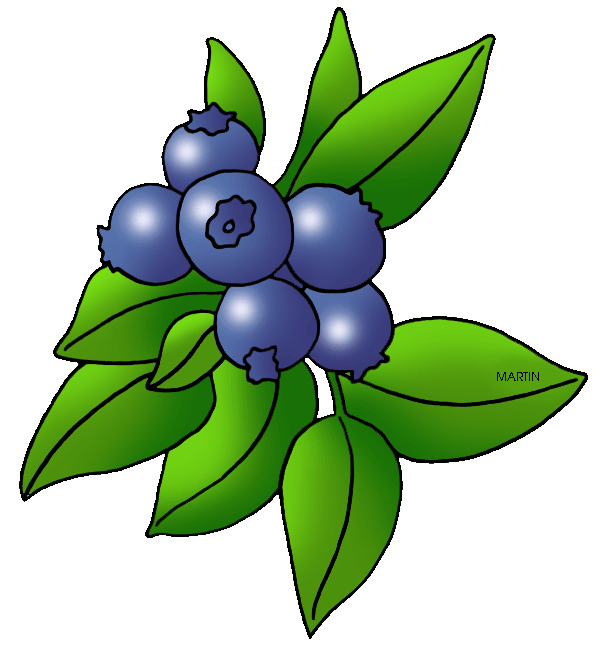 Startling berry cherry royalty. Blueberries clipart blueberry plant