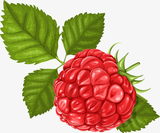 Hand painted fruit berry. Berries clipart raspberry