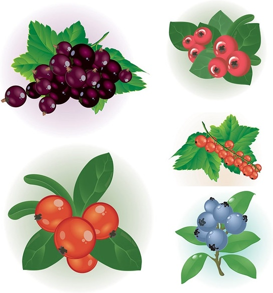 Berries clipart berry fruit. Small red clip art