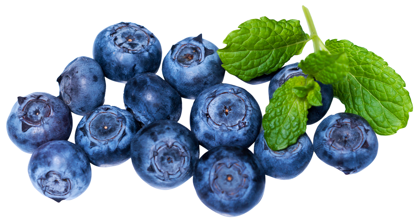 Png images free download. Blueberries clipart single