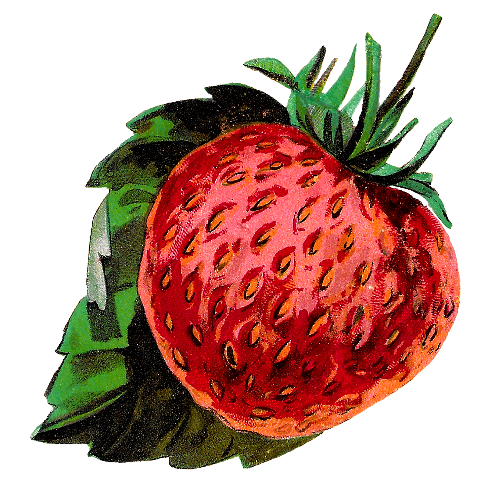 Jelly clipart homemade jam. Antique images strawberries fruit
