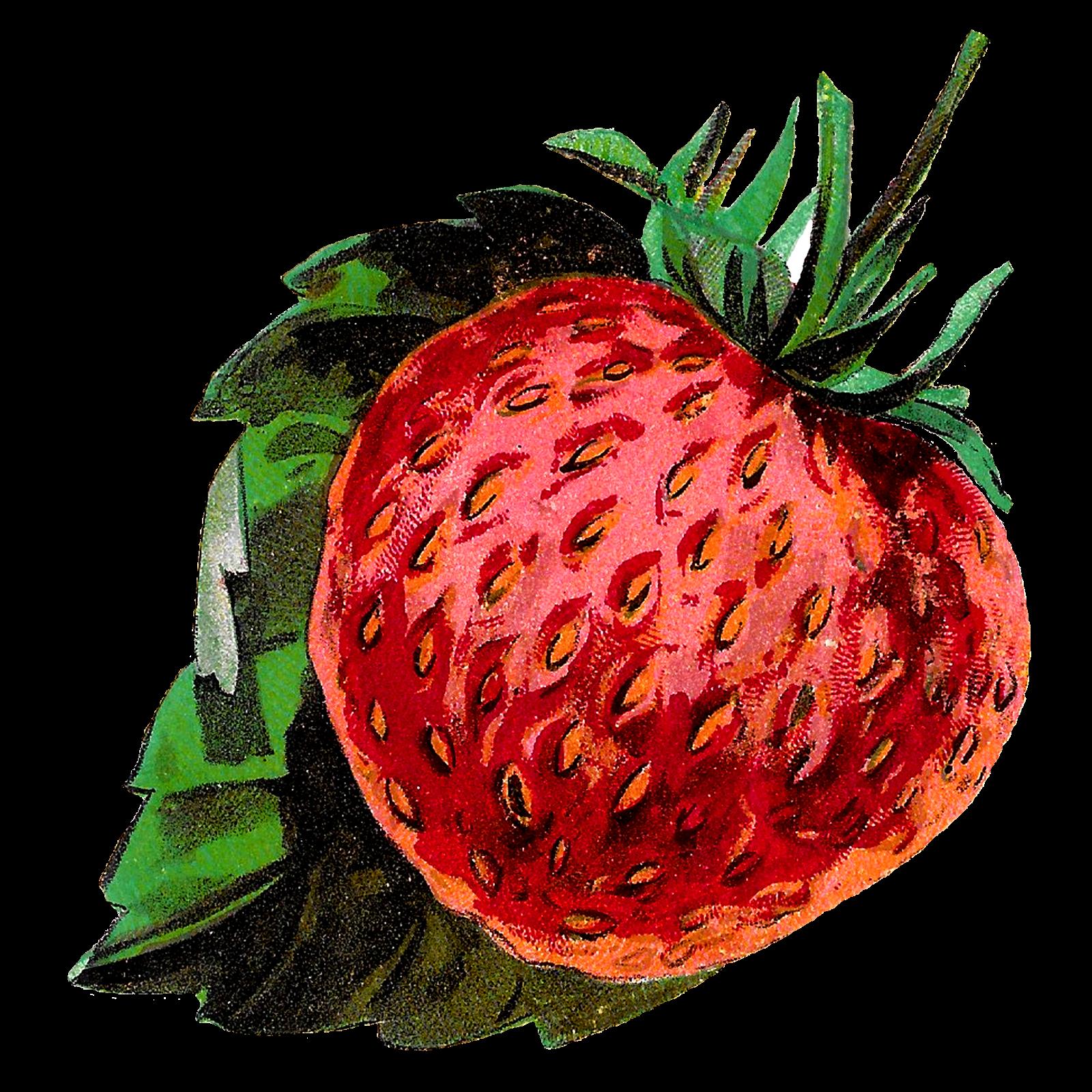 Antique images fruit stock. Strawberries clipart jar