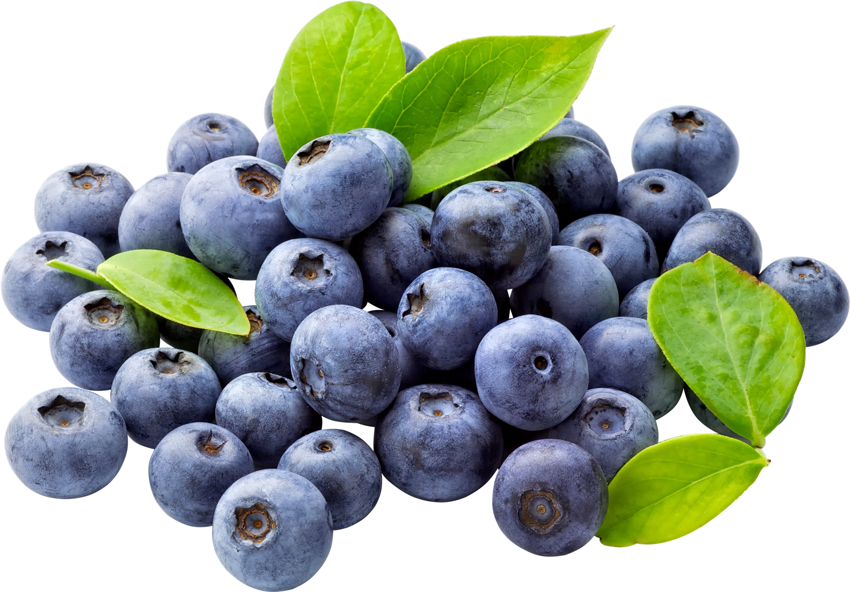 Blueberries clipart transparent background. Blueberry png free download