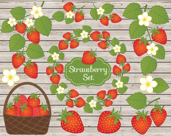 Strawberry berry rustic strawberries. Berries clipart vector
