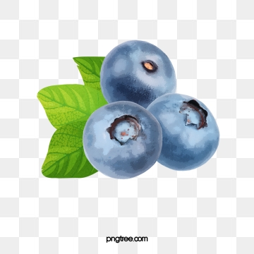 Png psd and with. Blueberry clipart vector