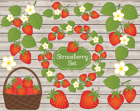 Strawberry rustic strawberries clip. Berry clipart vector