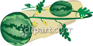 Watermelons on a royalty. Berry clipart watermelon vine