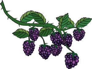 Berry clipart watermelon vine. Free berries image food