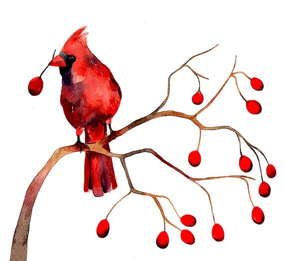 Berry clipart winter. Cardinal berries christmas watercolor