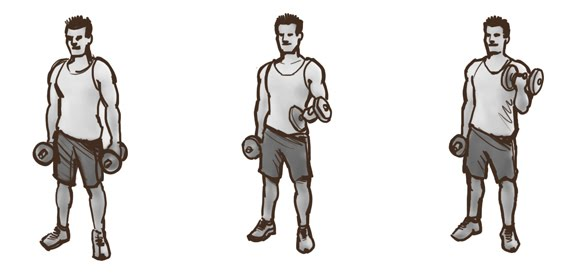 Bicep clipart bicep curl. The crafting of a