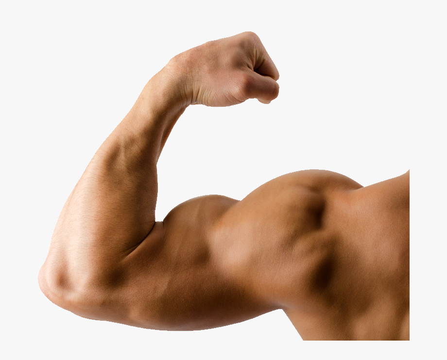 Bicep clipart big arm. Muscle arms transparent background