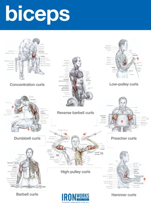 Bicep building muscle