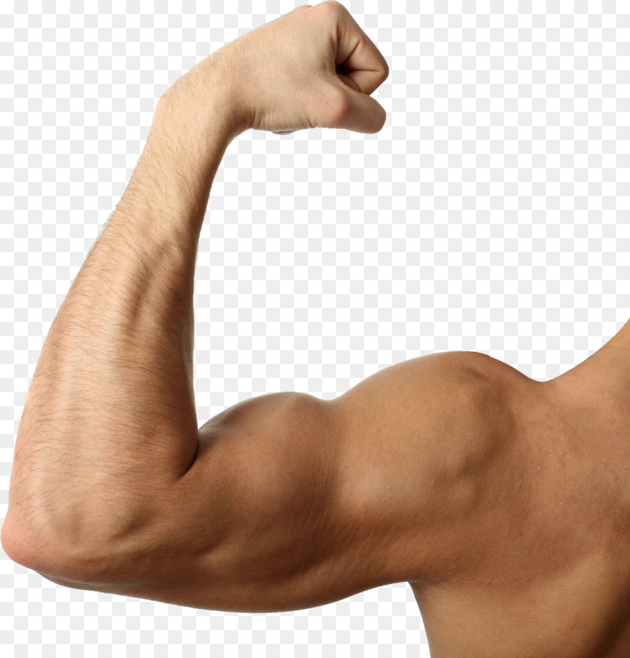 Biceps arm triceps brachii. Bicep clipart muscle hand