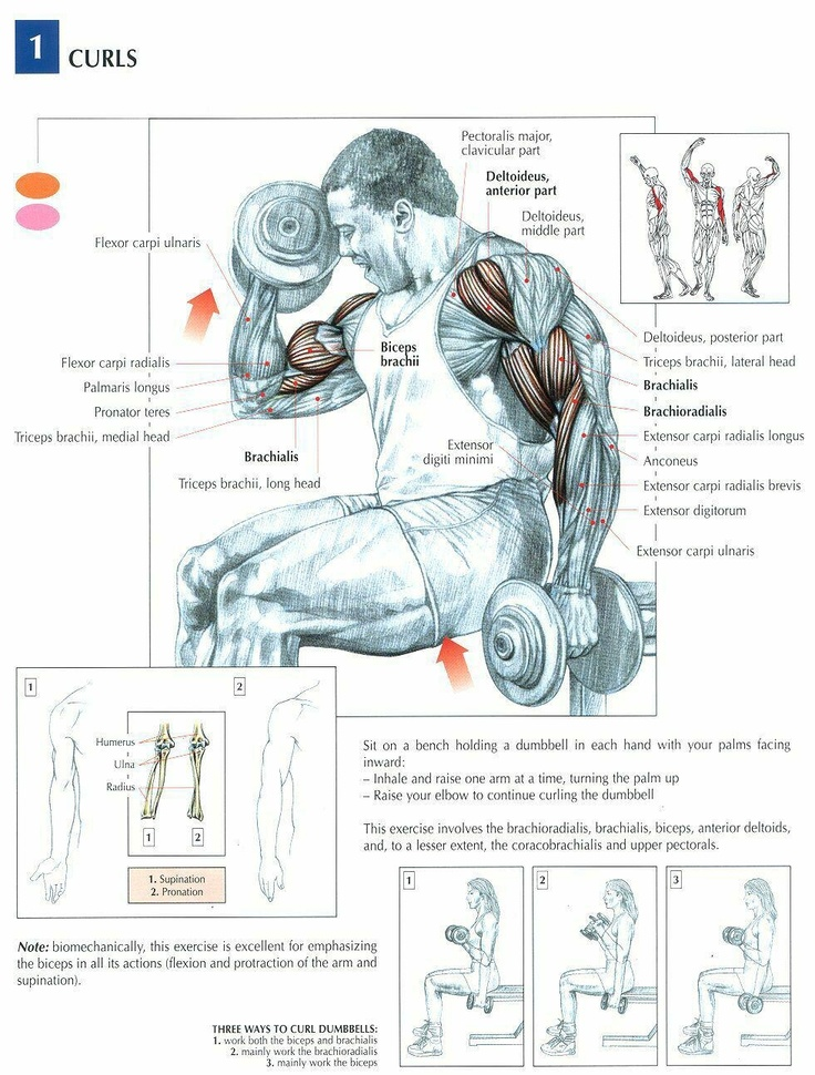 best exercises images. Bicep clipart physical wellness