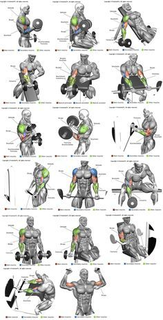 How to strength train. Bicep clipart physical wellness