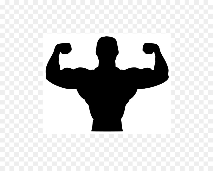Bicep clipart physical wellness. Bodybuilding exercise fitness centre
