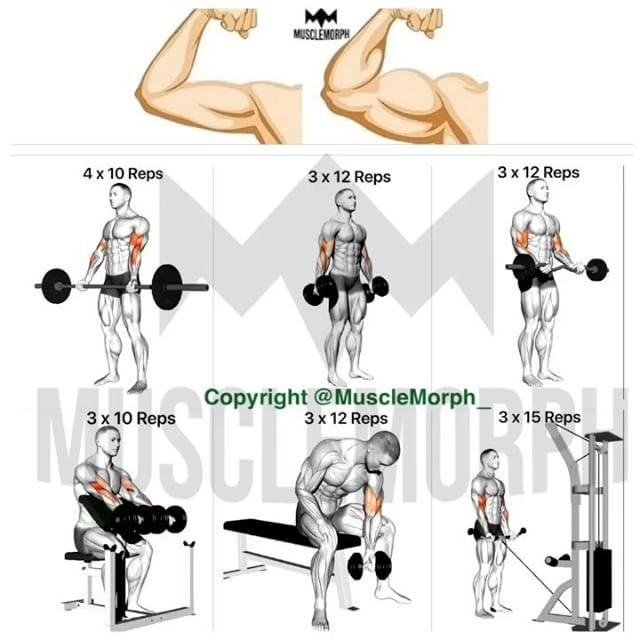 Bicep clipart physical wellness. Want bigger biceps try