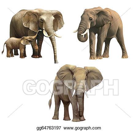 Elephants baby adult isolated. Big clipart african elephant