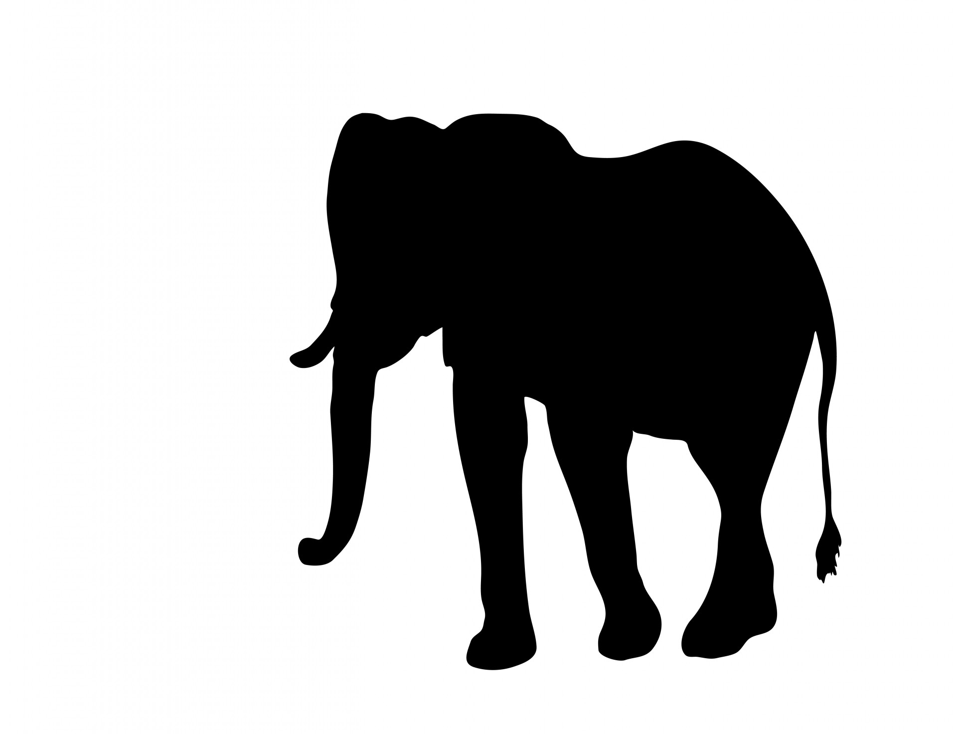 Big clipart african elephant. Silhouette free stock photo