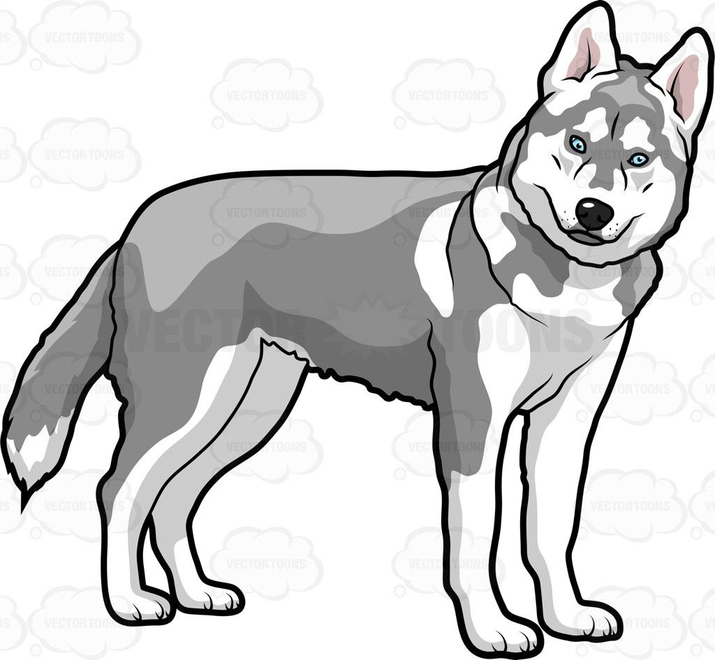 Husky clipart big dog. Free cliparts download clip