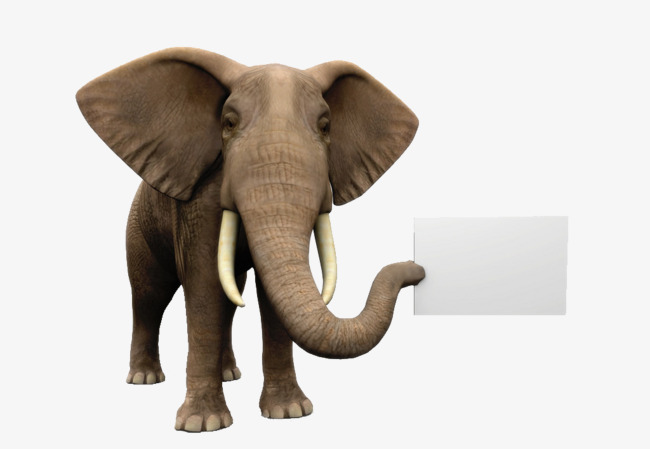 Ears wild animals large. Big clipart big elephant