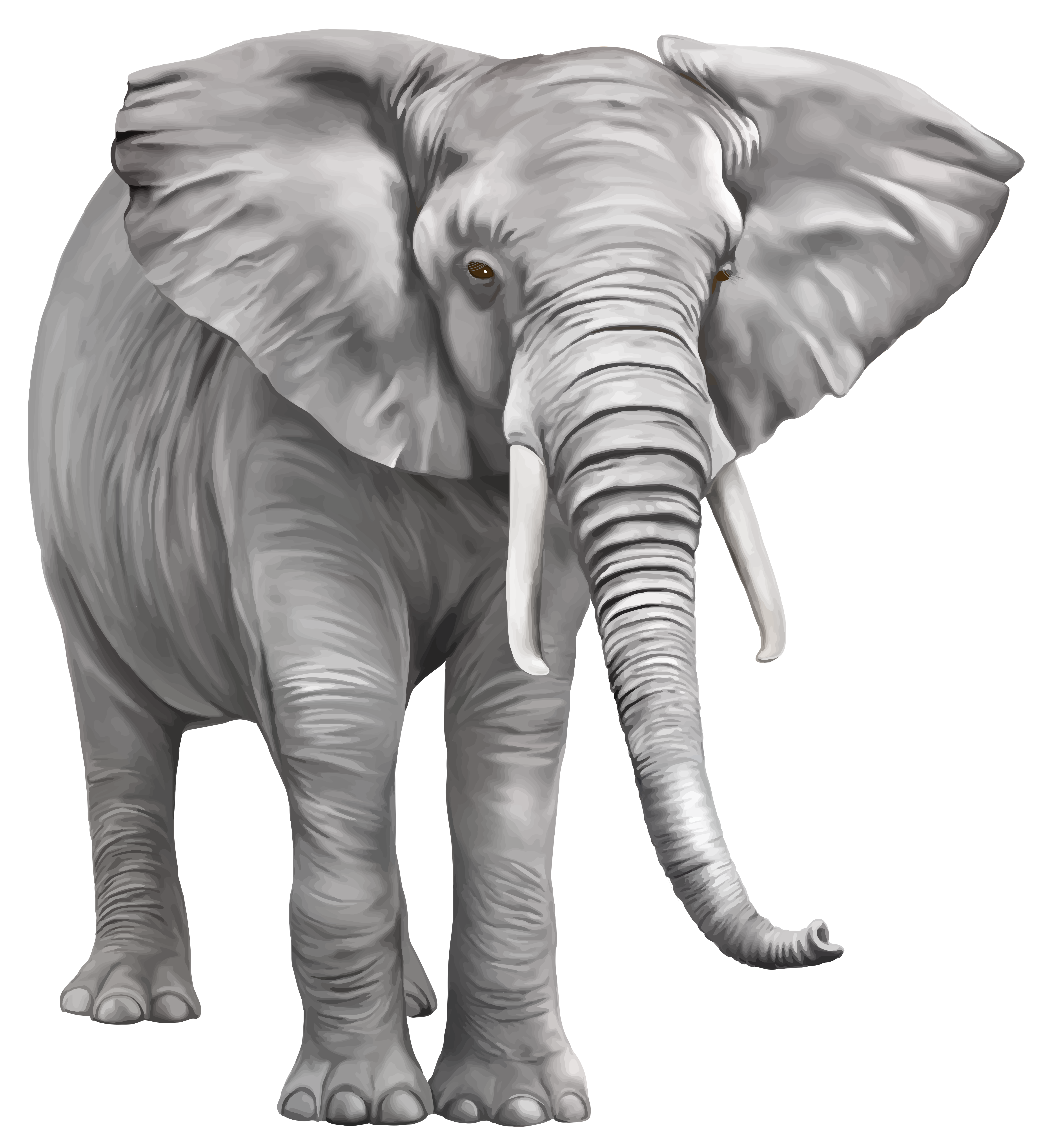 Clipart trees elephant. Large png best web