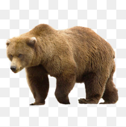 Png images vectors and. Big clipart brown bear