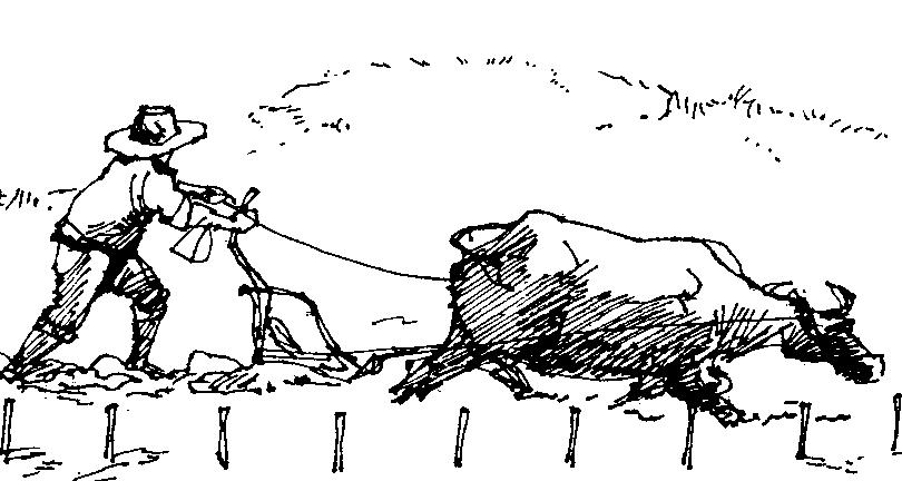 Big clipart carabao. Backyard raising for draft