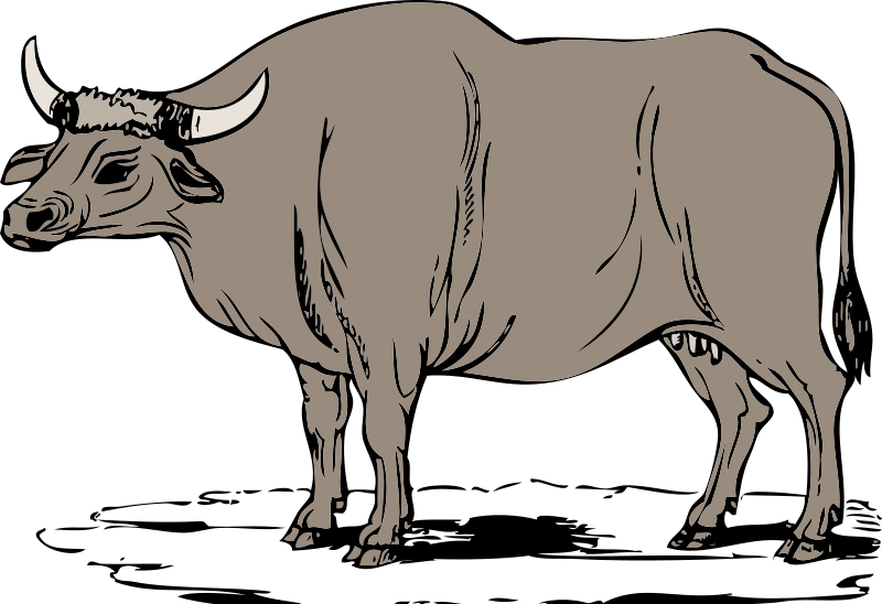 Collection of. Ox clipart ox face