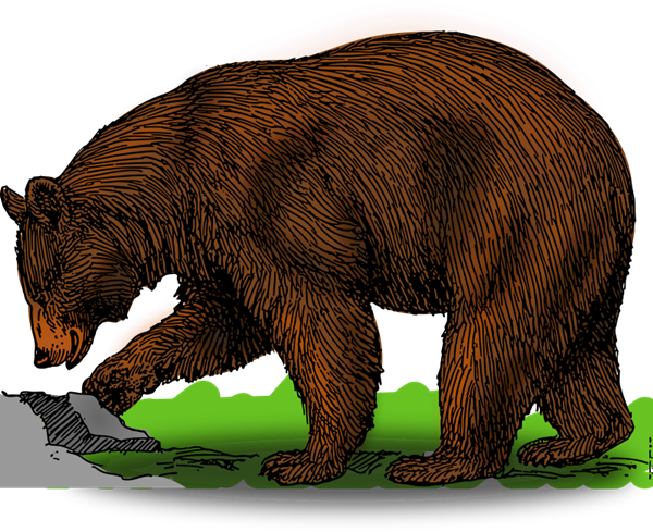 Clip art free download. Big clipart grizzly bear