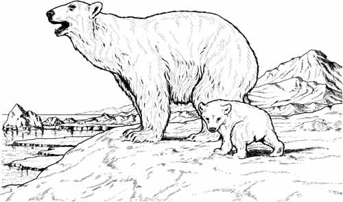 Bears info and games. Big clipart polar bear