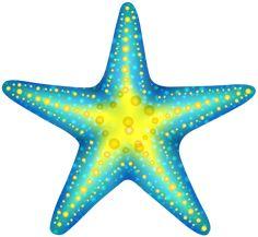 Big clipart starfish. Colorful seashell png ocean