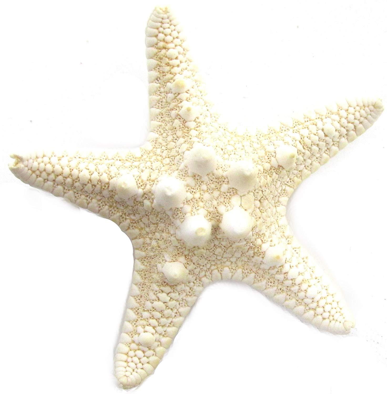Real hair clip beach. Big clipart starfish