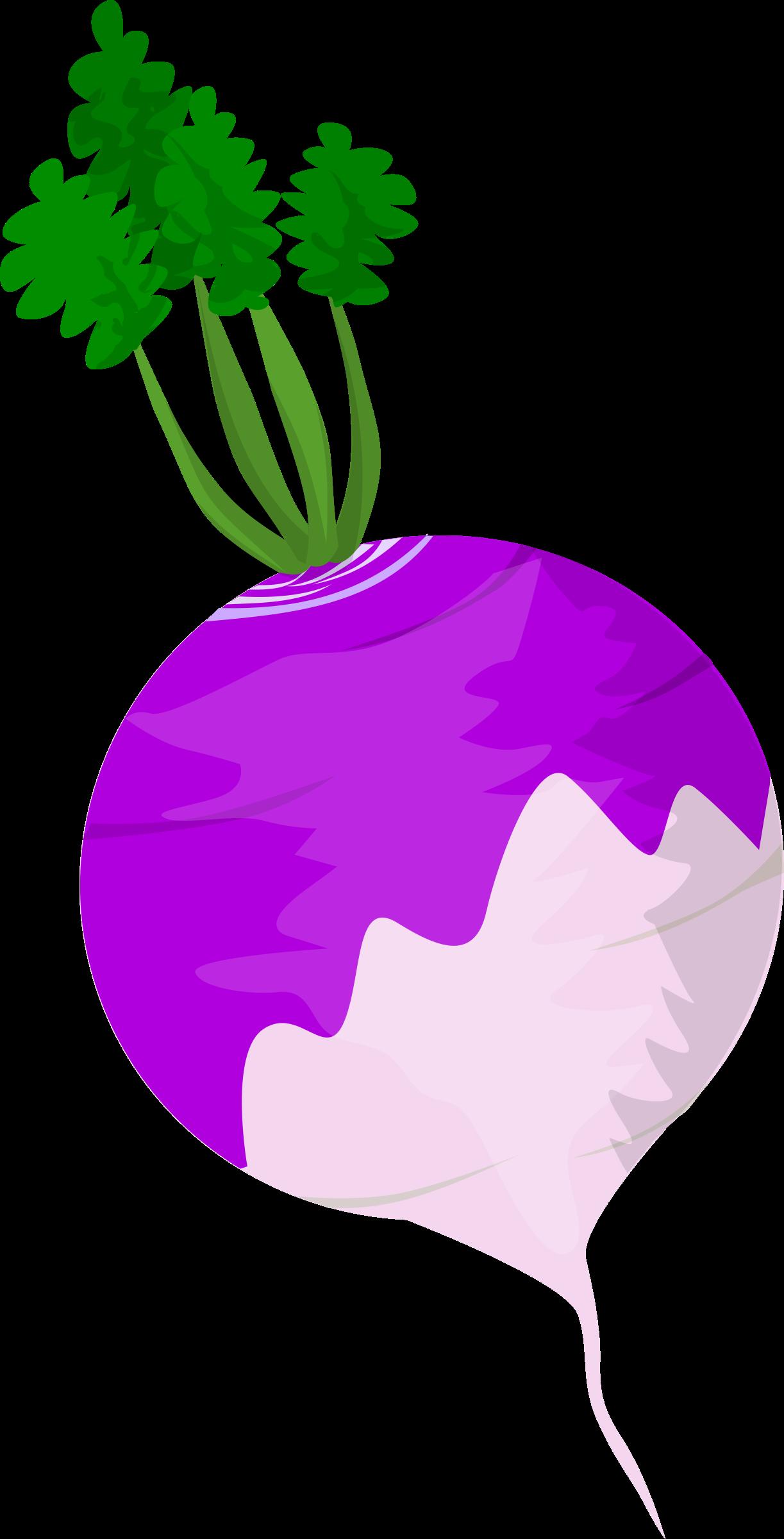 Vegetables clipart turnip. Big image png