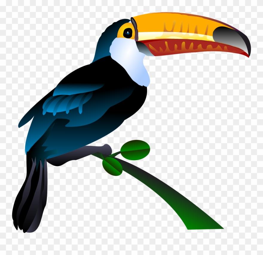Clip art freeuse library. Bill clipart bird
