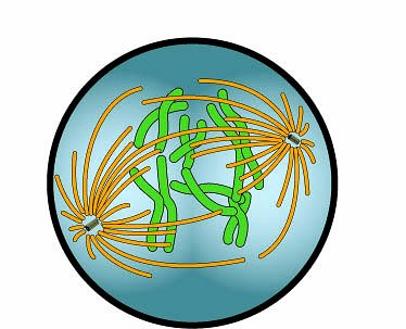 Biology clipart biology class. Free pictures download clip