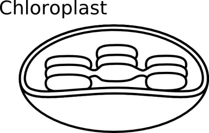 Biology clipart black and white. Free panda images
