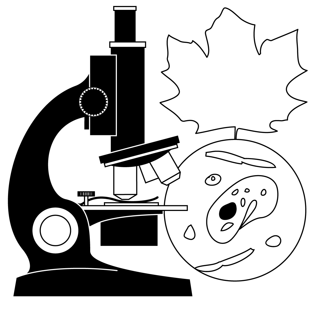 Biology clipart black and white. Free download clip art