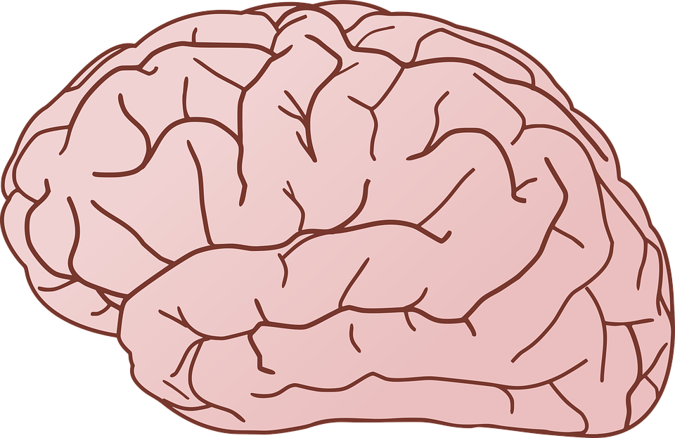 Bdnf natural ways to. Psychology clipart hippocampus brain