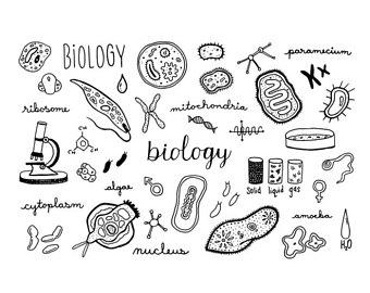 Biology clipart calligraphy. Etsy doodle set hi