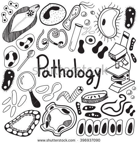 Biology clipart calligraphy. Pin on doodle and