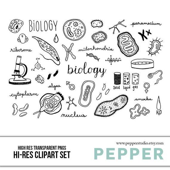Biology clipart calligraphy. Doodle set hi res